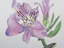 yr-11-student-natural-forms-unit-watercolour